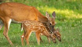 鹿がデータセンターに侵入(笑)